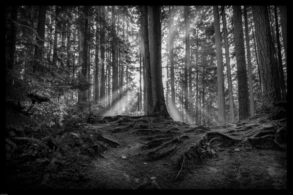 IMG_8963-Bearbeitet by Andreas Maier