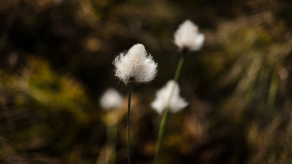 _DSF7846 by Andreas Maier