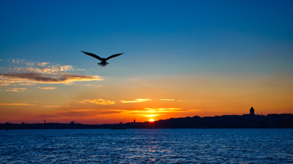 Spread your wings - Landscapes & Cityscapes - Arian Shkaki Photography