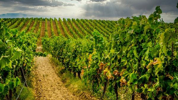 Vineyards - United Colours of Bulgaria - Arian Shkaki Photography