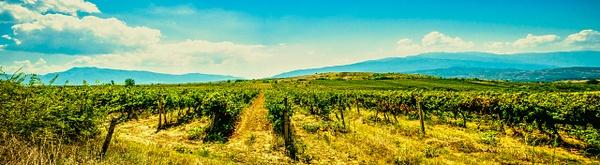 Vineyards near the town of Melnik - United Colours of Bulgaria - Arian Shkaki Photography