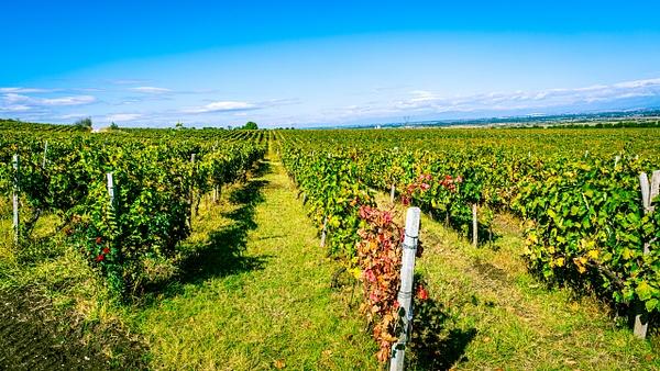 Zagreus Winery Vineyards - United Colours of Bulgaria - Arian Shkaki Photography