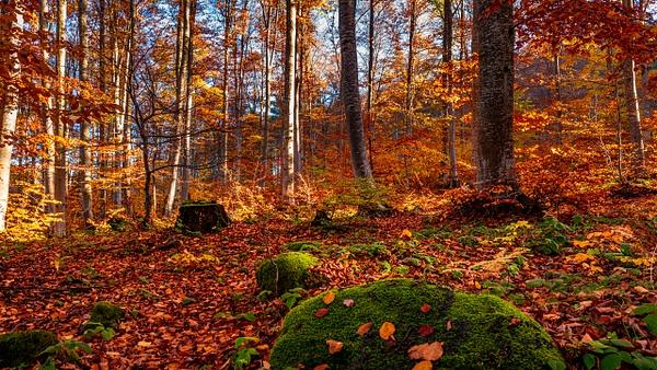 Autumn Grace by Arian Shkaki