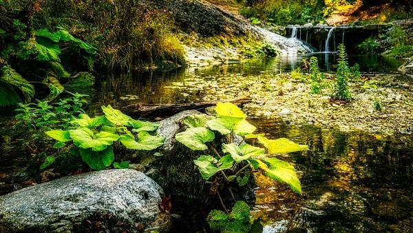 Mystic woodlands - United Colours of Bulgaria - Arian Shkaki Photography