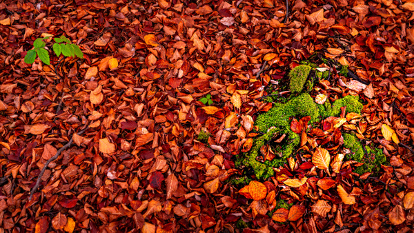 Autumn Carpet by Arian Shkaki