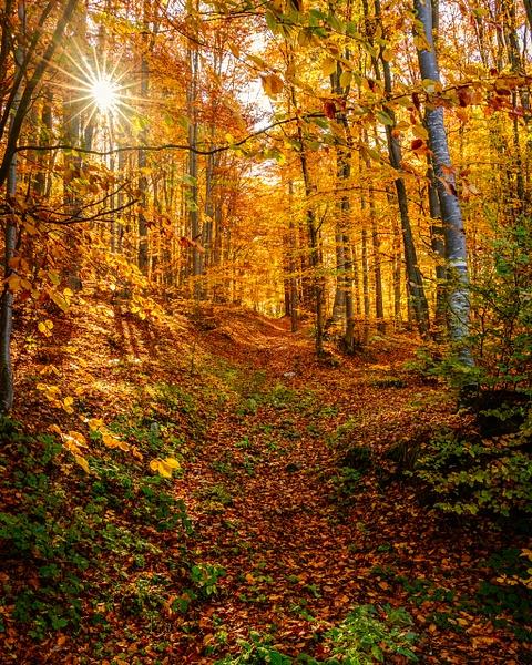Magical Forest - United Colours of Bulgaria - Arian Shkaki Photography