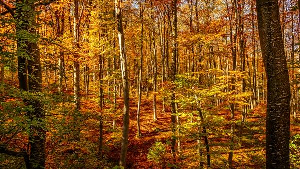 Colours of the Fall - United Colours of Bulgaria - Arian Shkaki Photography