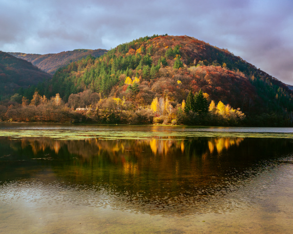 Calmness of the Fall by Arian Shkaki