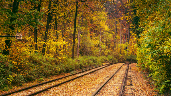 Tram line through the forest - United Colours of Bulgaria - Arian Shkaki Photography