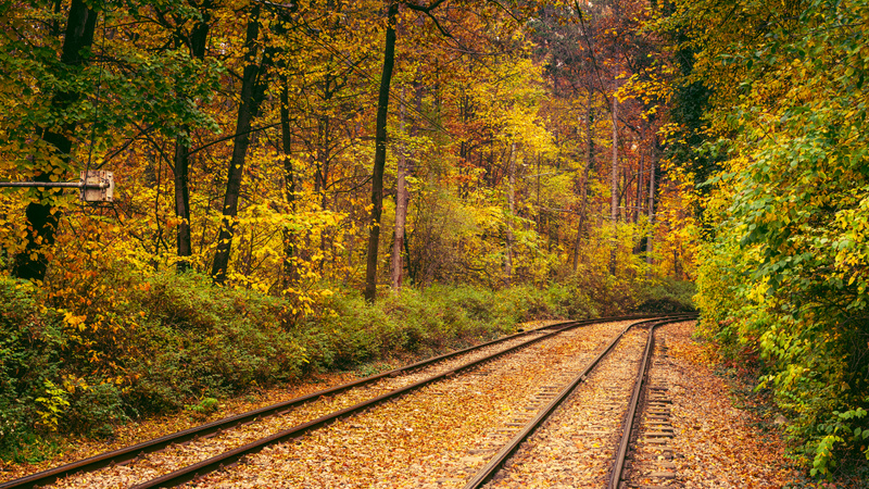 Tram line through the forest