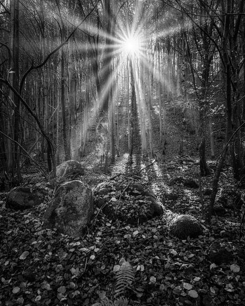 Mystic Woodlands - Black and White - Arian Shkaki Photography