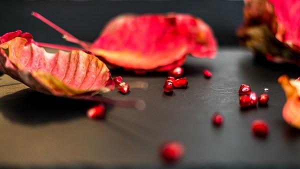 Pomegranate - От изолатора - Arian Shkaki