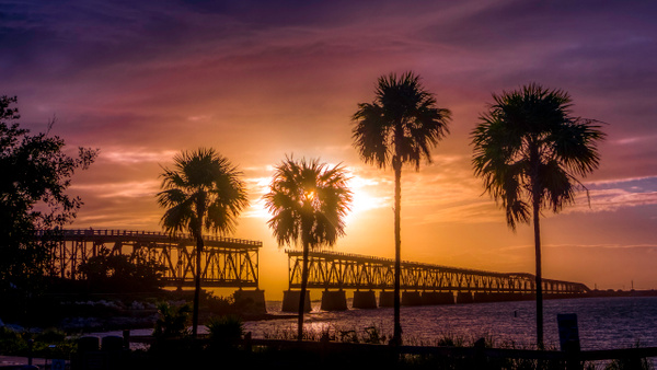 biahonda-2-19-2020-palmtrees - Key West - Bill Frische Photography