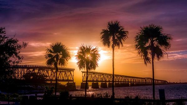 biahonda-2-19-2020-palmtrees - Key West, Florida - Bill Frische Photography