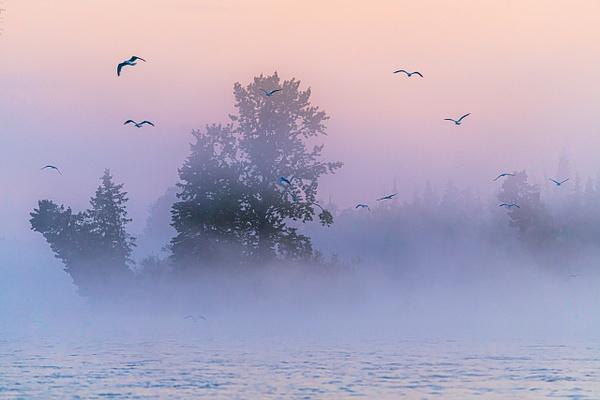 Kenai River Morning Mist, Soldotna, Alaska - Landscape - Jim Krueger Photography
