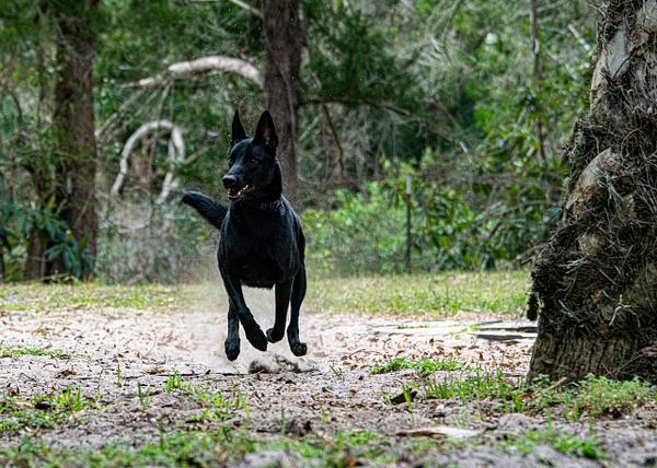 DSC03360 - Dogs - Jim Krueger Photography