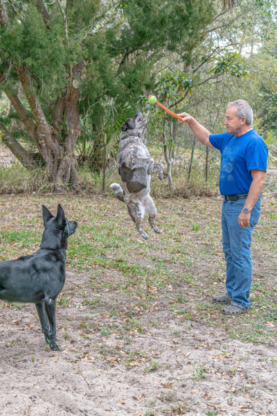 DSC03283 - Dogs - Jim Krueger Photography