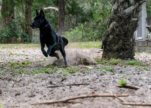 DSC03364 - Dogs - Jim Krueger Photography