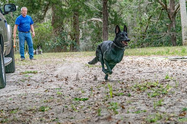 DSC03324 - Dogs - Jim Krueger Photography