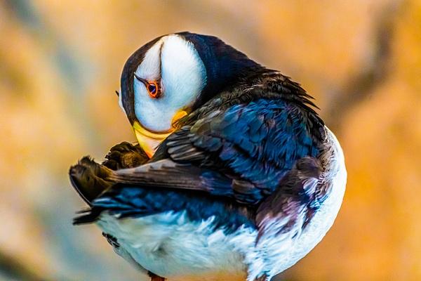 DSC08002 - Wildlife - Jim Krueger Photography