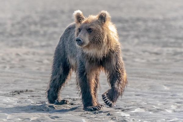DSC08395 - Wildlife - Jim Krueger Photography