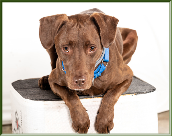 Portrait of Waylon - Dogs - Jim Krueger Photography