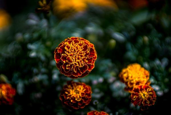 04 DA308043 - Nature - Ncubep Photography