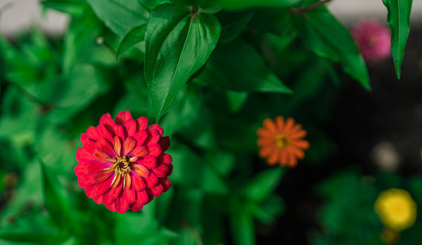 07 DA307964_O - Nature - Ncubep Photography