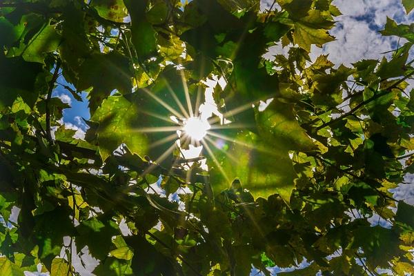 21 DA307990_O - Nature - Ncubep Photography