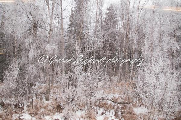 2-hoar frost Anchorage Alaska 11-18-2 - Alaskan Scenery - Graham Reichardt Photography