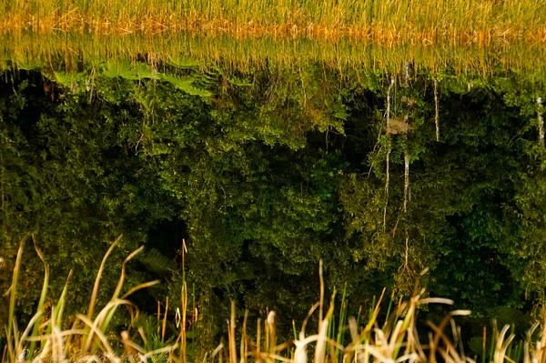 Bush reflection on Lake Rotoma - NZ Scenery - Graham Reichardt Photography