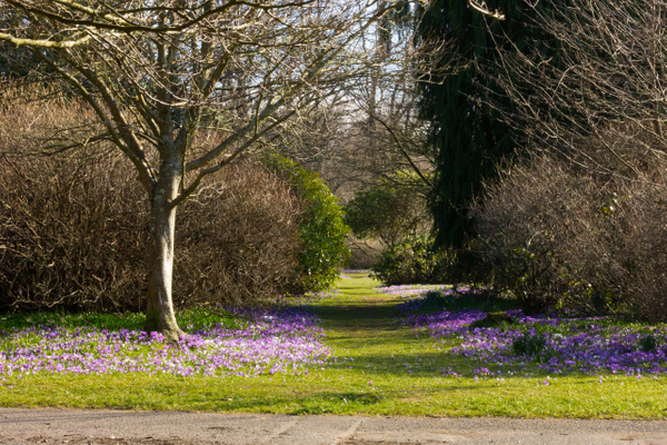 The Crocus Path - Castles and Landscapes - Ronald Bell