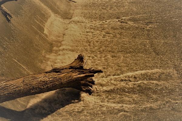 _DSC6900 - Nature and Man-Made Beauty - Tony Burns Photography