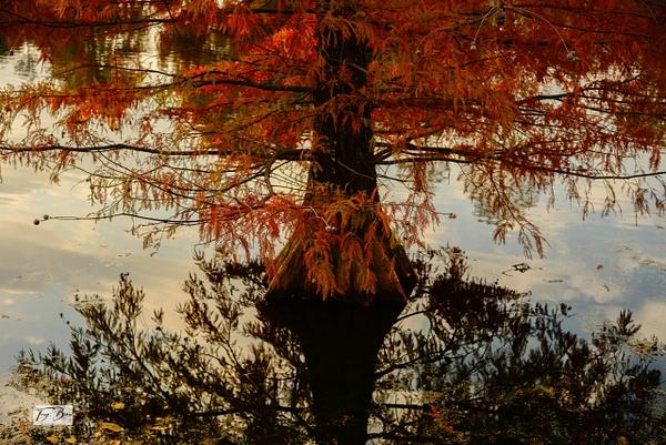 _DSC1425_edited (1) - Spirit of Life - Tony Burns Photography