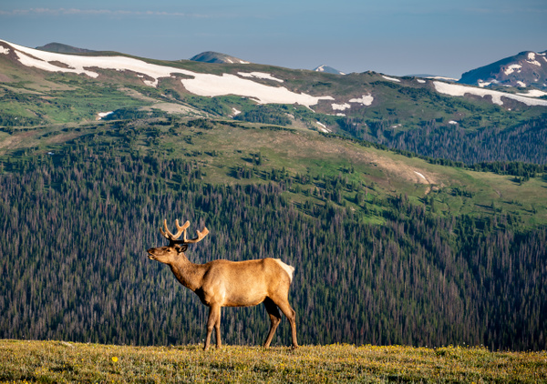 _DSC7595 - Colorado - Korey Shumway Photography