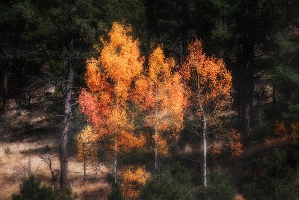 _DSC9726-Edit - Utah - Korey Shumway Photography