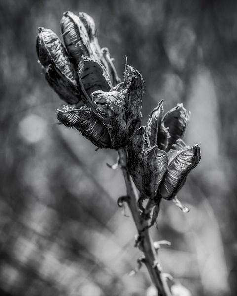 _DSC5663-Edit - Colorado - Korey Shumway Photography