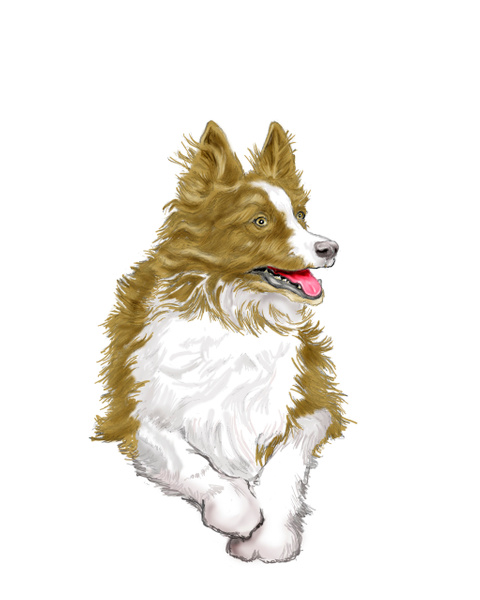 Dog for divideweb - Illustrations - Keith Ibsen Photography