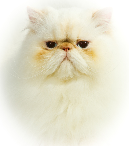 Cheshire Cats 256 - Cats and Kittens - KeithIbsenPhotography