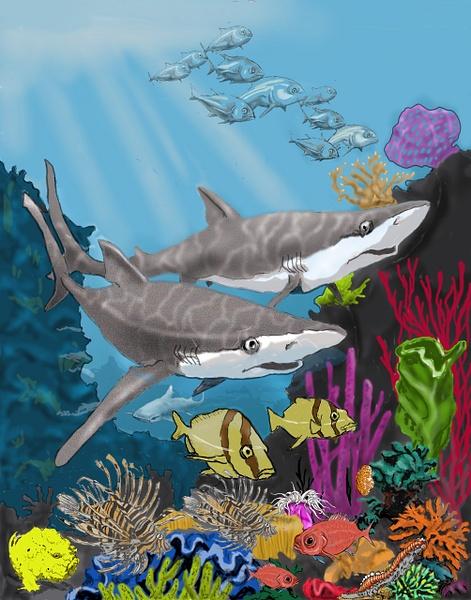 Marine lifesharksCorr2jpg - Illustrations - Keith Ibsen Photography