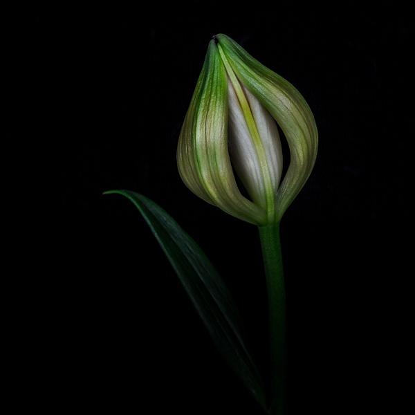 flowers-4 - Home - JaxPropix Photography