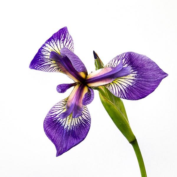 2020=07 website still life flowers-1 - Jersey Shore - JaxPropix Photography