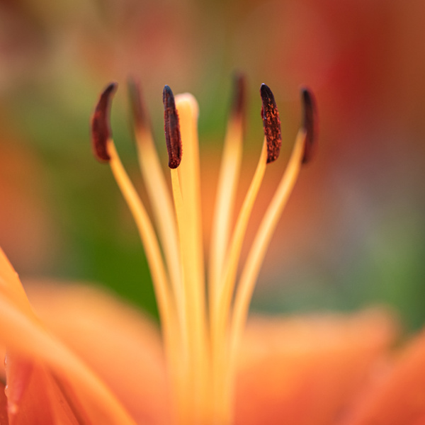 2020=07 website garden flower-9 - Home - JaxPropix Photography