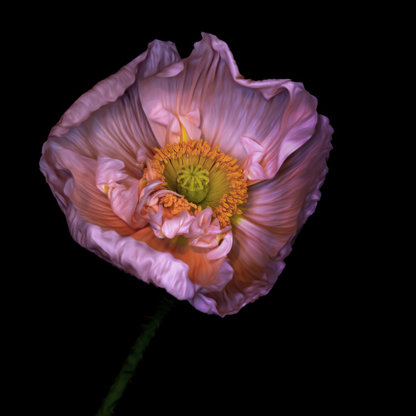 poppy square - Home - JaxPropix Photography