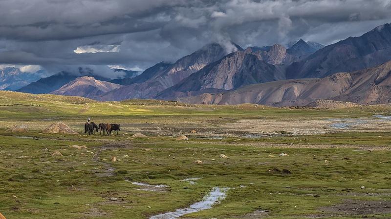 Ladakh - Nimaling