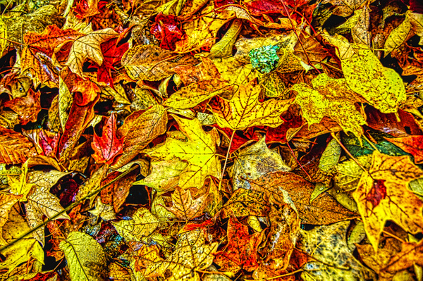 New England Leaves