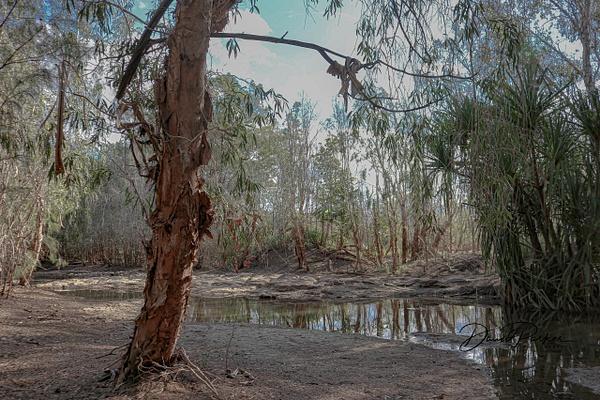 Gregory River by DavidParkerPhotography