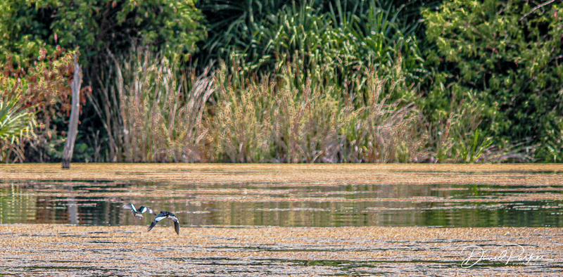 Birdlife, Ord River
