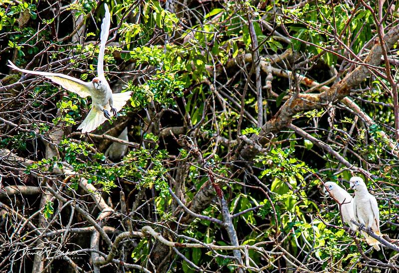 Birdlife along the Ord River