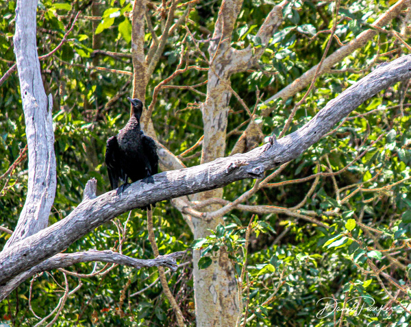 Birdlife along the Ord River by DavidParkerPhotography